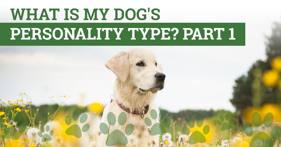What is My Dog's Personality Type? Part 1