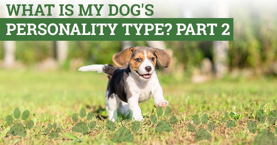 What is My Dog's Personality Type? Part 2