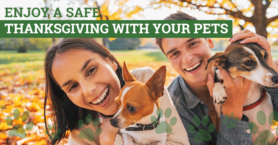 Enjoy a Safe Thanksgiving with Your Pets