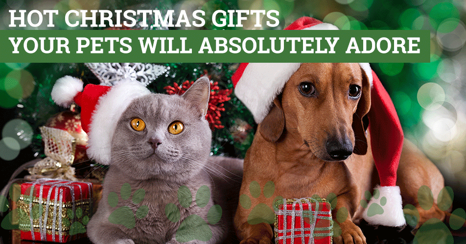 Hot Christmas Gifts Your Pets Will Absolutely Adore