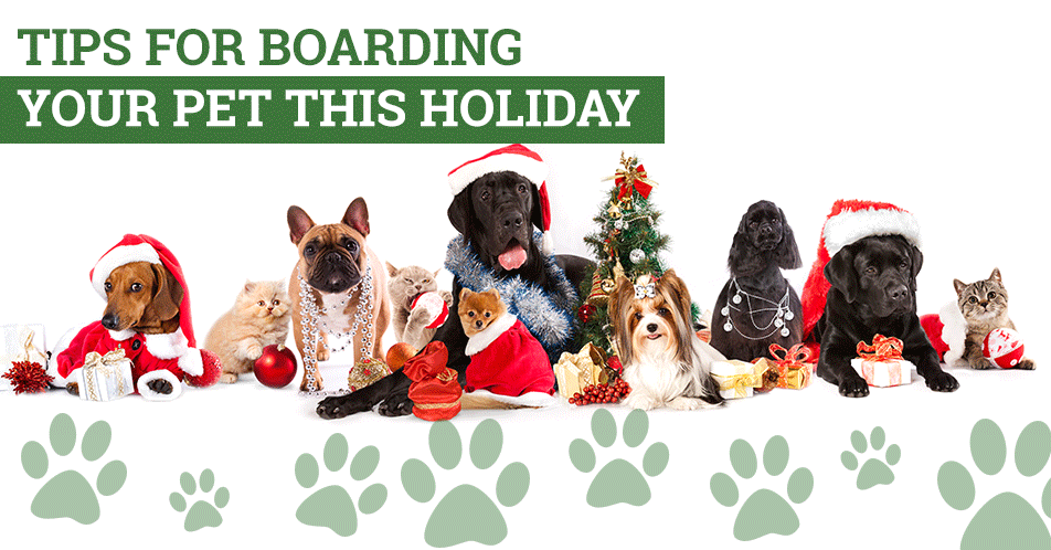 Tips for Boarding Your Pet This Holiday