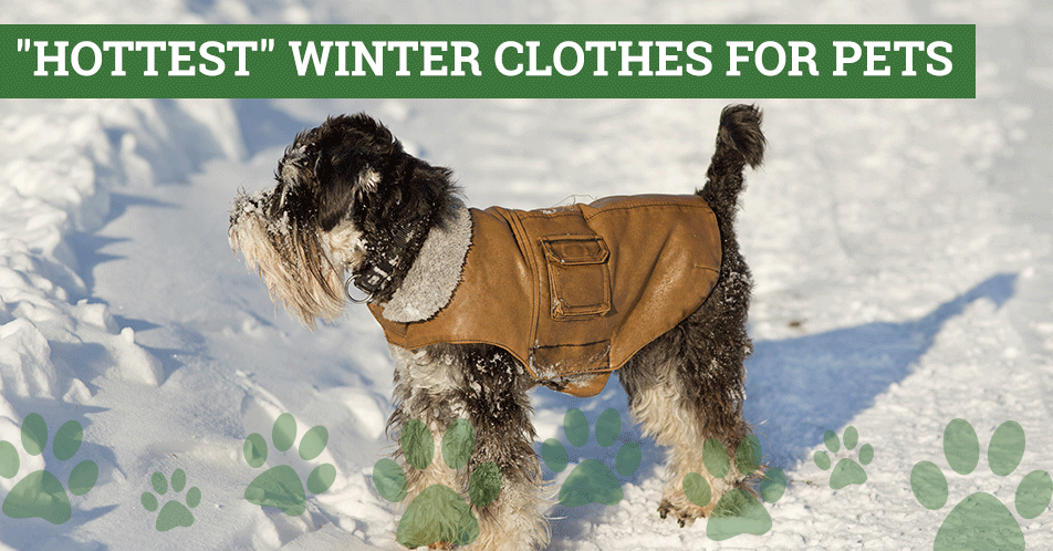 """Hottest"" Winter Clothes for Pets"
