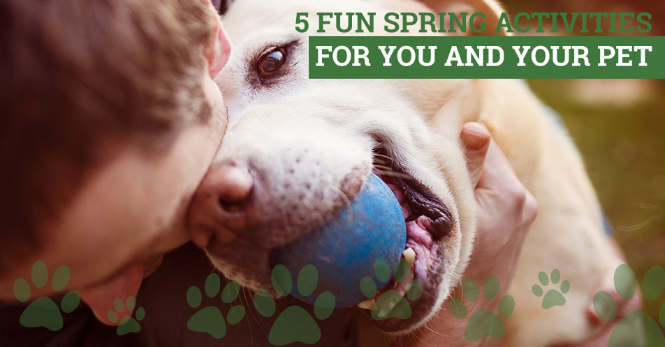 5 Fun Spring Activities for You and Your Pet